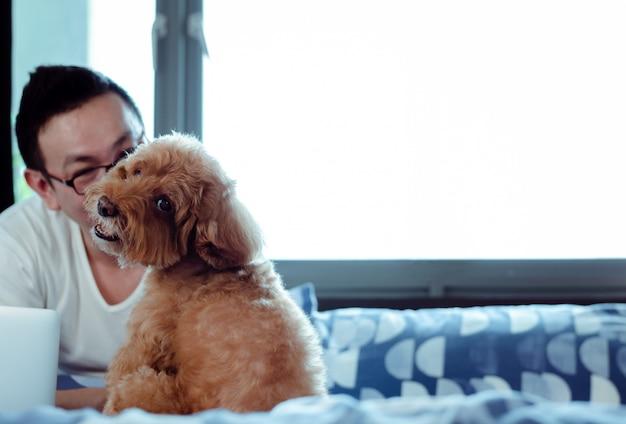 Uroczy brown pudla pies patrzeje kamerę gdy cieszy się i szczęśliwy