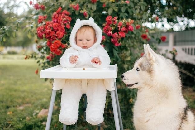 Uroczy chłopczyk w kostiumie niedźwiedzia siedzi na wysokim krześle z psem husky patrząc na niego