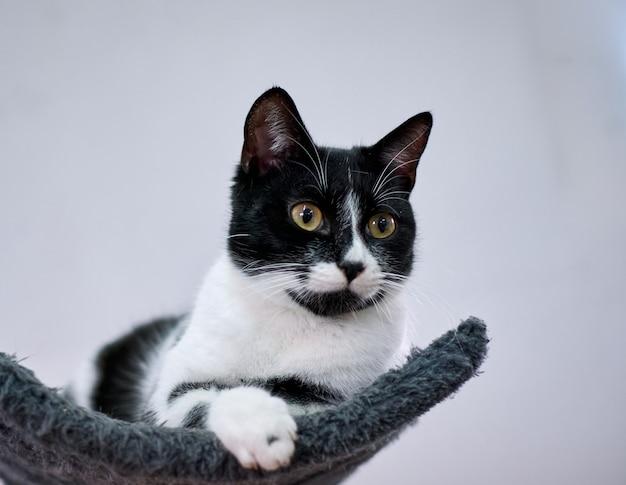 Uroczy czarno-biały kot z dużymi wyrazistymi oczami leżący na kotwicy