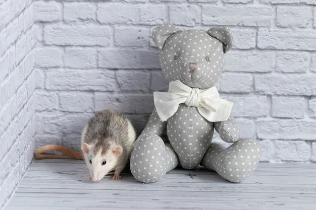 Uroczy czarno-biały szczur bawi się szarym, tekstylnym misiem na białej ścianie z cegły