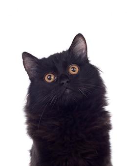 Uroczy czarny kot perski