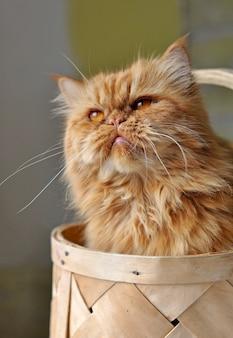 Uroczy czerwony kot domowy siedzi w wiklinowym koszu