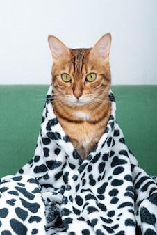 Uroczy domowy kot bengalski w paski o zielonych oczach siedzi na sofie, przykryty miękkim kocem z nadrukiem.