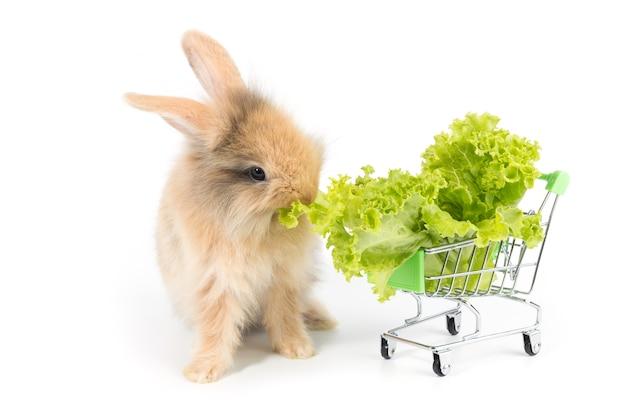 Uroczy dziecko królik je organicznie sałaty w wózek na zakupy na białym tle
