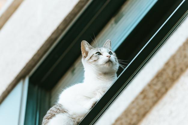 Uroczy i ciekawy kot spoglądający z okna na ludzi na ulicy