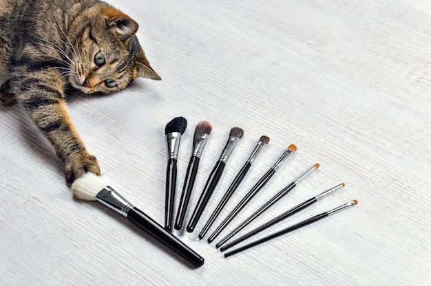 Uroczy kot bengalski wybiera swój ulubiony pędzel do makijażu.