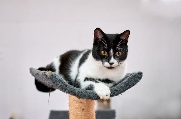 Uroczy kot łaciaty pozuje na drapaku