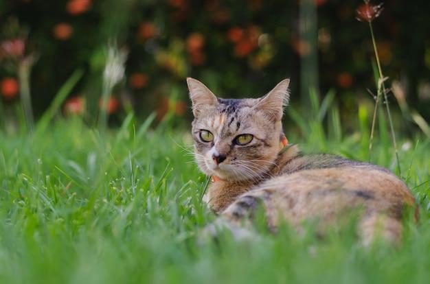 Uroczy kot relaksuje na trawie z zamazanym tłem.