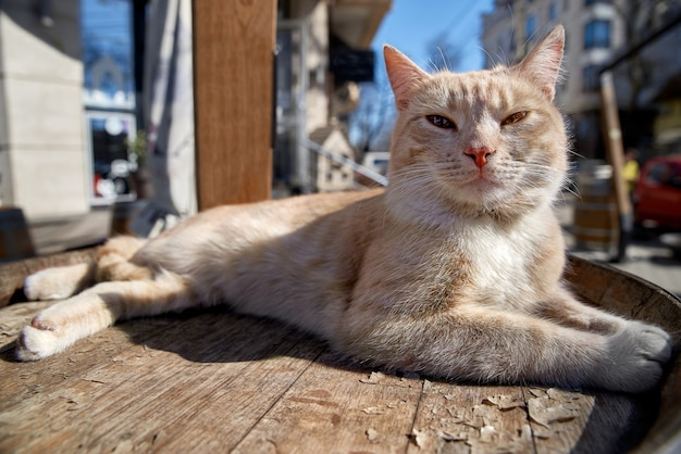 Uroczy kot z dużymi błyszczącymi żółtymi oczami patrzy w kamerę
