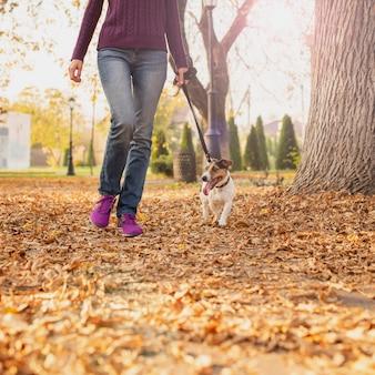 Uroczy małego psa odprowadzenie w parku
