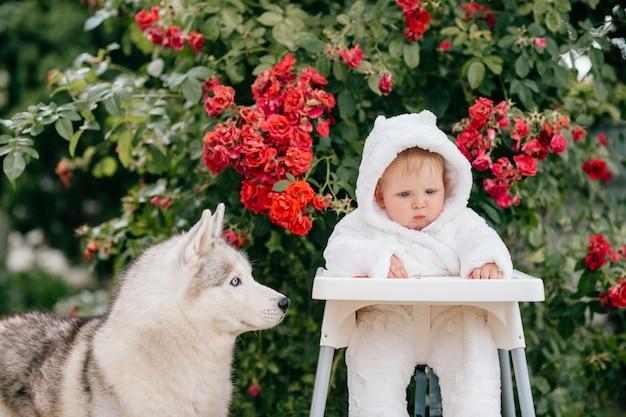 Uroczy mały chłopiec w kostiumie niedźwiedzia siedzącego na wysokim krześle na zewnątrz z husky w pobliżu