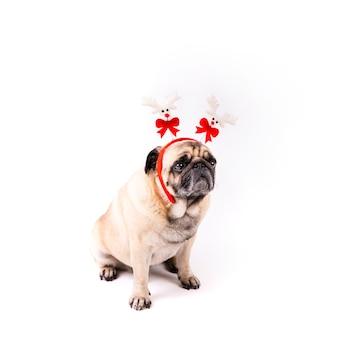 Uroczy mops z świąteczną opaską
