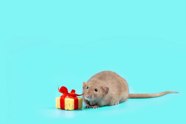 Uroczy ozdobny szczur z prezentem z sera i czerwoną kokardką