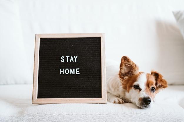 Uroczy pies jack russell na kanapie z tablicą na listy z komunikatem pobyt w domu.