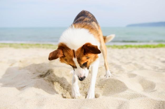 Uroczy pies kopie w piasku