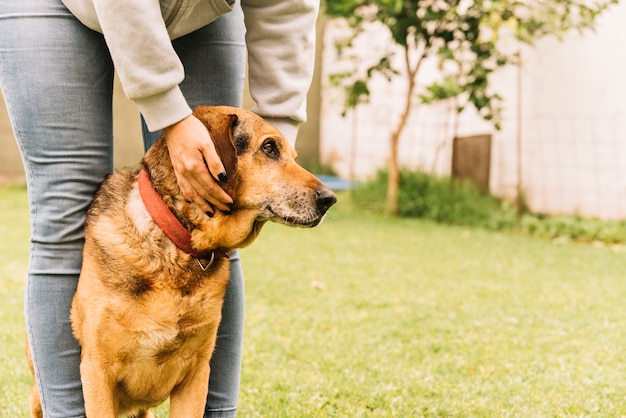 Uroczy pies pozuje w ogródzie
