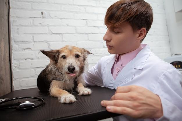 Uroczy pies ratowniczy rasy mieszanej wystawiający język, leżący na stole diagnostycznym w klinice weterynaryjnej