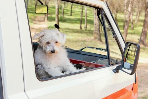 Uroczy pies siedzi przy oknie samochodu