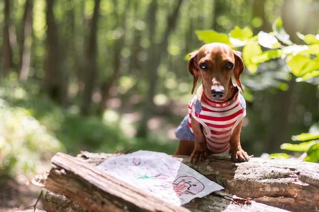 Uroczy pies w poszukiwaniu skarbów w lesie