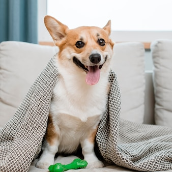 Uroczy pies z zabawką pod kocem