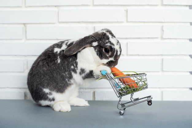 Uroczy puszysty króliczek jedzący świeżą marchewkę z zabawkowego koszyka na białym murem