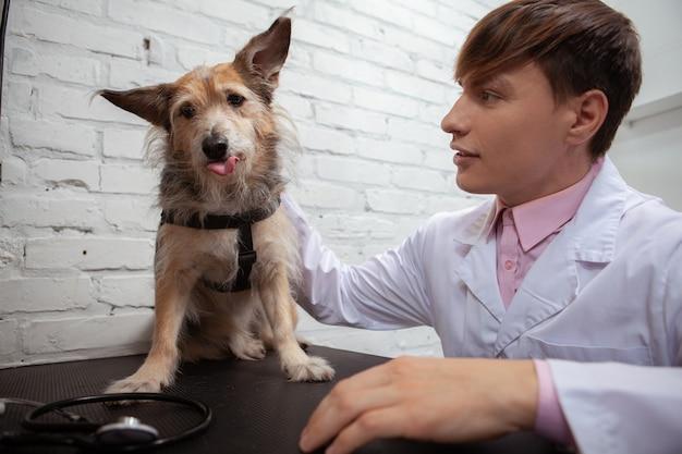 Uroczy puszysty pies ze schroniska wystawiający język, podczas gdy mężczyzna weterynarz go głaszcze