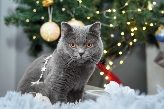 Uroczy szary kot brytyjski krótkowłosy wyth dekoracje