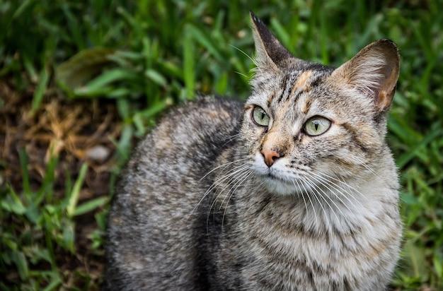 Uroczy szary kot z wzorami i zielonymi oczami