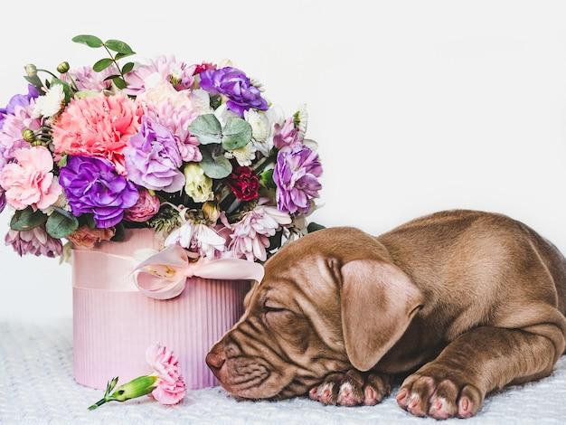 Uroczy szczeniaczek o brązowym umaszczeniu i jasnych kwiatach.