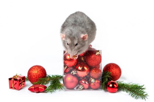 Uroczy szczur dumbo z ozdób choinkowych. 2020 rok szczura. gałązki świerkowe, czerwone bombki. chiński nowy rok.
