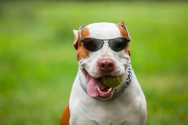 Uroczy zabawny pies nosi okulary przeciwsłoneczne
