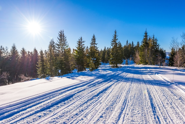 Urzekający widok na stok narciarski z pięknym widokiem na zaśnieżony las iglasty i słoneczne pasma górskie w pogodny mroźny dzień