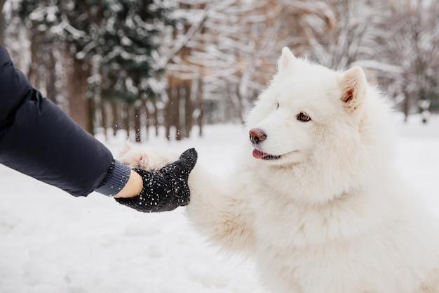 Uścisk dłoni z białym psem. właściciel z psem rodowodowym w lesie