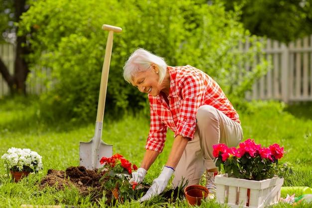 Uśmiecha się po posadzeniu. starzejąca się siwowłosa kobieta ubrana w kwadratową koszulę uśmiechnięta po posadzeniu ładnych czerwonych kwiatów