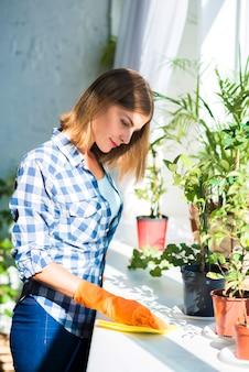 Uśmiechnięta młoda kobieta czyści powierzchnię blisko doniczkowej rośliny w świetle słonecznym