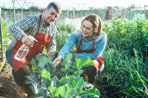 Uśmiechnięta średniorolna para nawadnia brokuł plantację z kropidłem w organicznie polu
