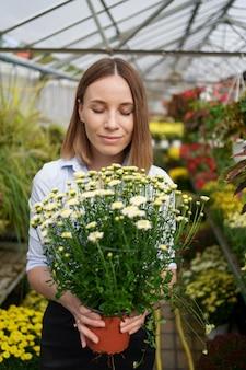 Uśmiechnięta szczęśliwa kwiaciarka w swoim przedszkolu stojąca, trzymając w rękach doniczkowe chryzantemy, gdy zajmuje się ogrodowymi roślinami w szklarni
