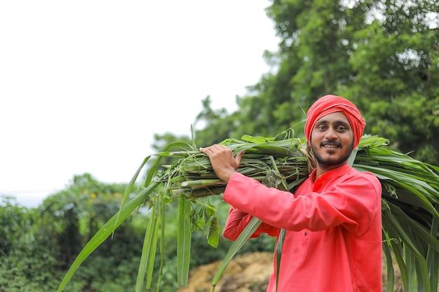 Uśmiechnięty azjatycki rolnik niosący świeżą zieloną trawę na ramieniu do karmienia bydła