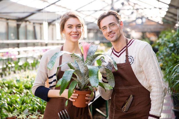 Uśmiechnięty mężczyzna kwiaciarnia i kobieta ogrodniczka w brązowych fartuchach trzyma piękny różowy kwiat w doniczce z dużymi liśćmi w oranżerii