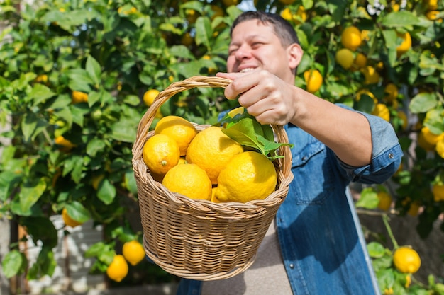 Uśmiechnięty młody rolnik zbioru zbierania cytryn w sadzie