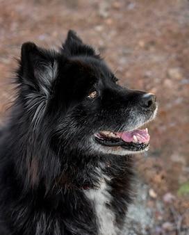 Uśmiechnięty piękny pies na zewnątrz