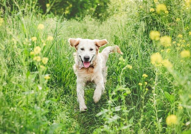 Uśmiechnięty pies biegnący po naturze wśród kwitnącej zieleni