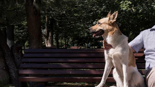 Uśmiechnięty pies na ławce na zewnątrz