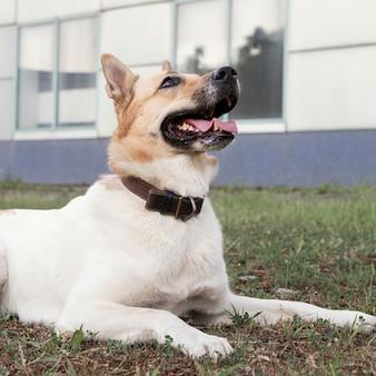 Uśmiechnięty pies na trawie patrząc w górę