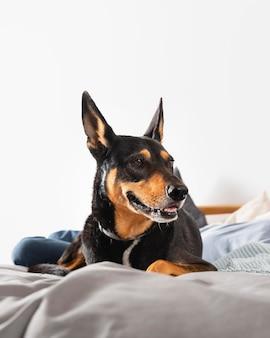 Uśmiechnięty pies r. w łóżku