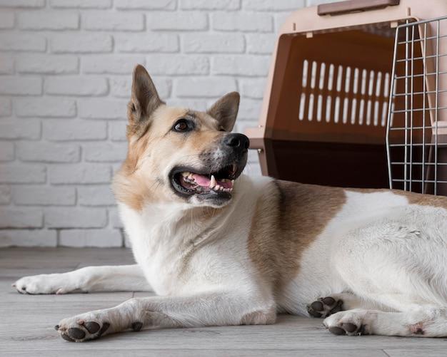 Uśmiechnięty pies siedzi w pobliżu budy