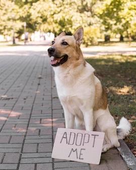 """Uśmiechnięty pies z banerem """"adoptuj mnie"""""""