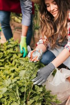 Uśmiechnięty portret żeńska ogrodniczka żyłuje rośliny z nożycami