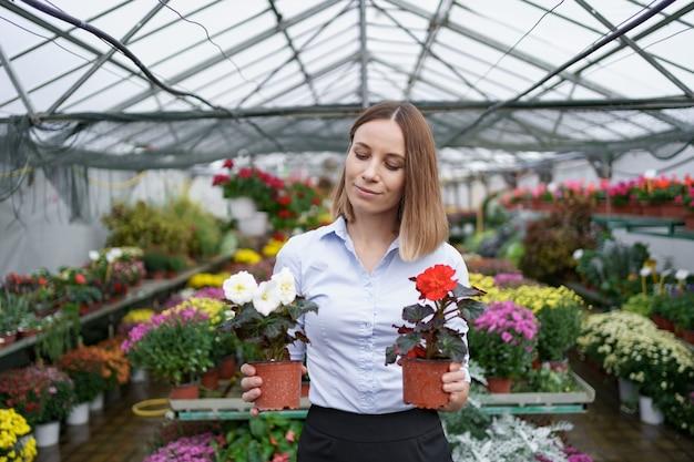 Uśmiechnięty właściciel firmy w jej stałego przedszkola trzymając w rękach dwa garnki z czerwonymi i białymi kwiatami w szklarni
