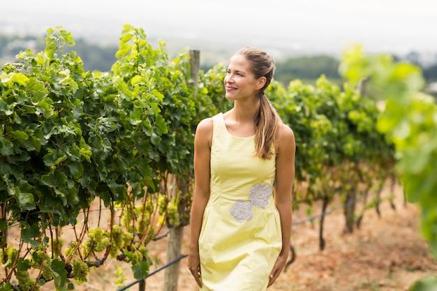 Uśmiechnięty żeński winiarz patrzeje gronowej uprawy